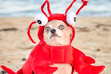 The Craziest And Funniest Dog Costumes
