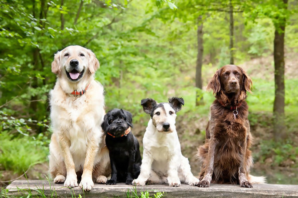 What Breed Of Dog Would You Be?