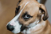 Dog Behaviors And What They Really Mean