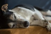 How To Help Your Aging Dog Thrive