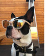You Have An Instagram Account For Your Dog