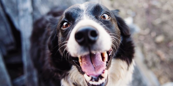 The Smartest Dog Breeds In The World, Ranked