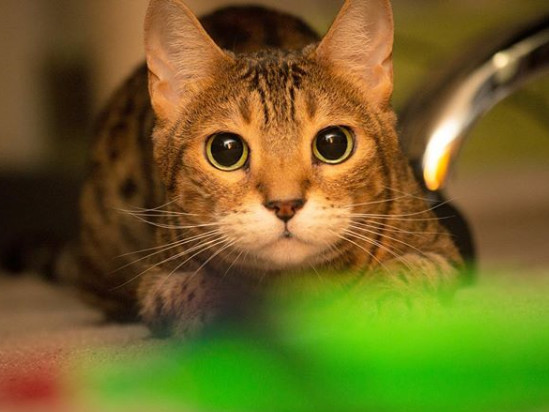 Most Popular Cat Names: No. 5 Lucy