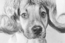 Cute And Funny Vintage Dog Pictures