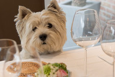 Can Dogs Eat Watermelon? What You Should Know About Dogs And Fruits With Seeds